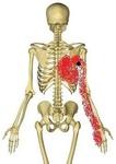 広背筋疼痛腋窩背面.jpg