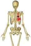 胸腸肋筋1.jpg
