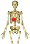 胸腸肋筋2.jpg