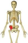 胸腸肋筋4.jpg